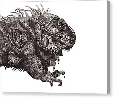 Green Iguana-profile Canvas Print by Tracey Gurr BA Hons