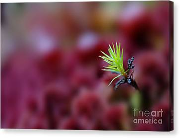Green In A Sea Of Red Canvas Print by Dan Friend