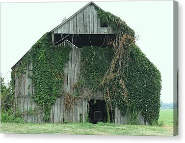 Green Ivy Barn Canvas Print by Terry Scrivner
