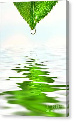 Green Leaf Over Water Reflection Canvas Print by Sandra Cunningham