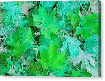 Green Leaves Canvas Print by Aimee L Maher Photography and Art Visit ALMGallerydotcom