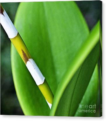 Green Leaves Canvas Print by Heiko Koehrer-Wagner