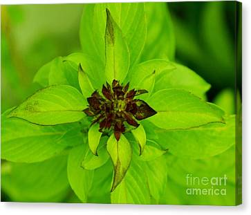 Green Leaves Canvas Print by Jyoti Vats