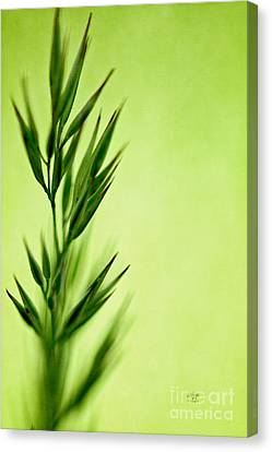 Green Canvas Print by Lois Bryan