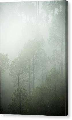 Green Mist Canvas Print by Rajiv Chopra