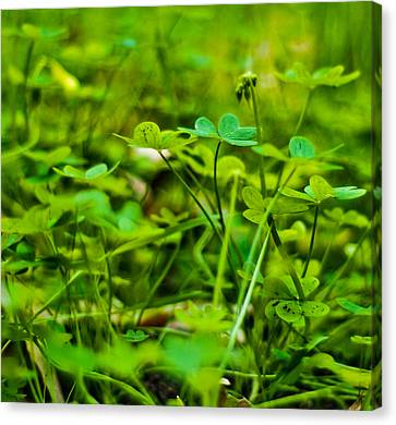 Green Morning  Canvas Print by Andrew Raby
