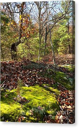 Green Moss By The Road Canvas Print by Janet Felts