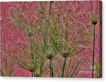 Green On Pink Canvas Print by Deborah Smolinske