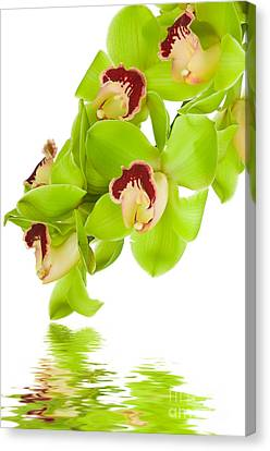 Green Orchid Canvas Print by Boon Mee