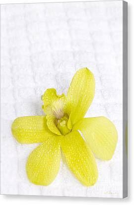 Green Orchid On Spa Towel Canvas Print by Iris Richardson