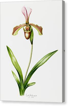 Green Orchid Canvas Print by Sally Crosthwaite
