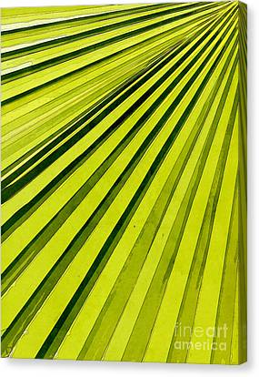 Green Palm Frond Canvas Print