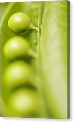 Green Peas  Canvas Print by Vishwanath Bhat