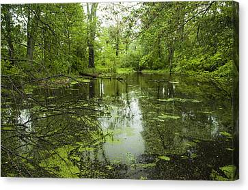 Canvas Print featuring the photograph Green Blossoms On Pond by Jerry Cowart