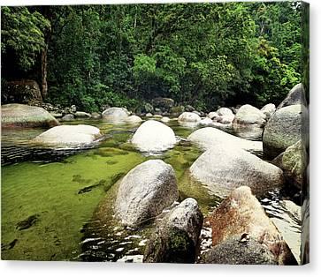 Green Rain Forest Canvas Print