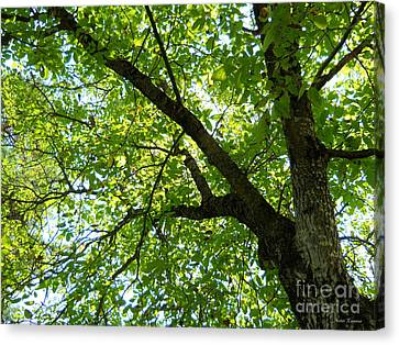 Canvas Print featuring the photograph Green by Ramona Matei