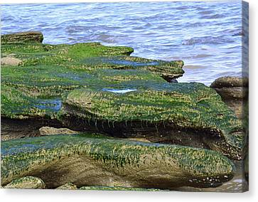 Green Rock Mossy Monsters Canvas Print