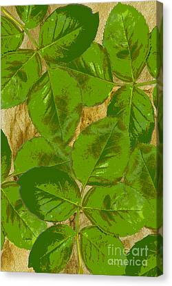 Green Rose Clippings 2 Canvas Print