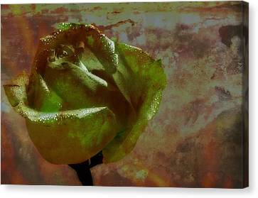 Canvas Print featuring the photograph Green Rose by Thomas Born
