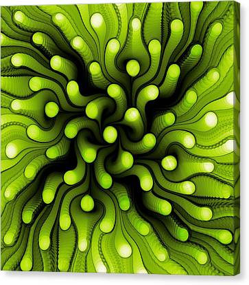 Green Sea Anemone Canvas Print by Anastasiya Malakhova