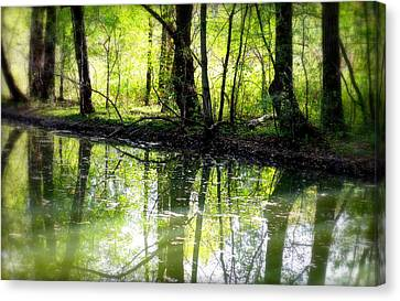 Canadian Marsh Canvas Print - Green Shadows by Valentino Visentini