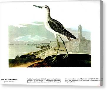 Heron Canvas Print - Green Shank by Celestial Images
