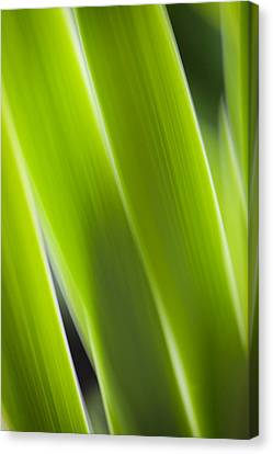 Blade Of Grass Canvas Print by Silke Magino