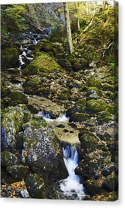 Green Stream  Canvas Print by Julie Smith