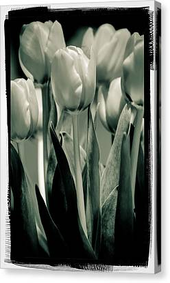 Green Toned Tulip Canvas Print