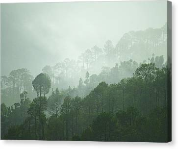 Green Trees Canvas Print by Rajiv Chopra