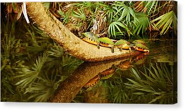 Green Turtles Chelonia Mydas On A Tree Canvas Print by Panoramic Images