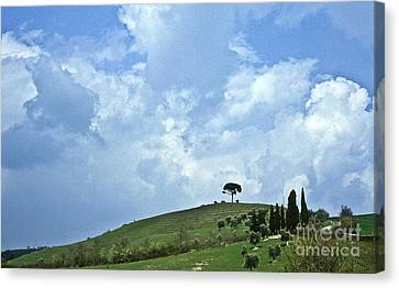 Green Tuscan Hills Canvas Print by Heiko Koehrer-Wagner