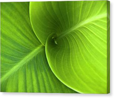Green Twin Leaves Canvas Print by Heiko Koehrer-Wagner