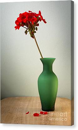 Green Vase Canvas Print by Donald Davis