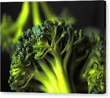 Green Vegetables Canvas Print by Jenny Hudson