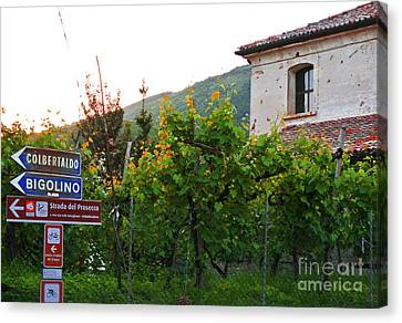 Green Vineyards Canvas Print by Sarah Christian