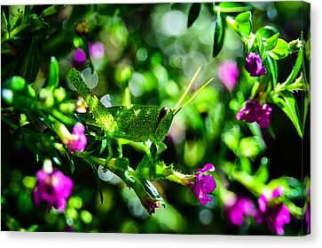 Green Visitor In The False Heather Canvas Print by Brian Xavier