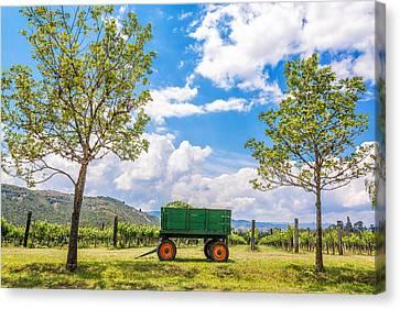 Green Wagon And Vineyard Canvas Print