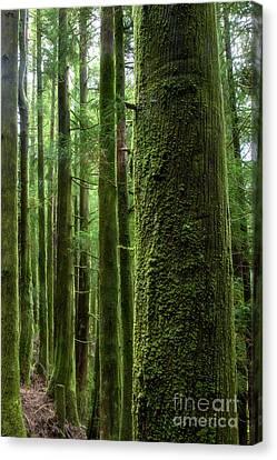 Green Wood Canvas Print