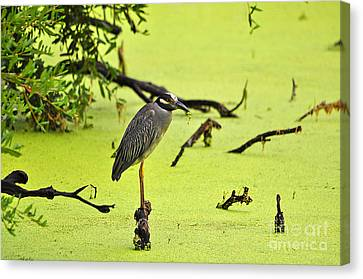 Green Yellow And Red Canvas Print by Al Powell Photography USA