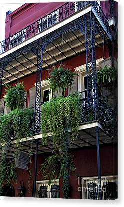 Greens In New Orleans Canvas Print by John Rizzuto