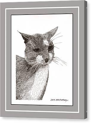 Grey Cat Number 12 Canvas Print