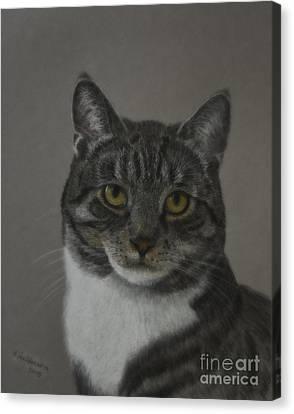 Grey Cat Canvas Print by Veikko Suikkanen