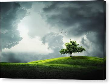 Grey Clouds Over Field With Tree Canvas Print by Bess Hamiti