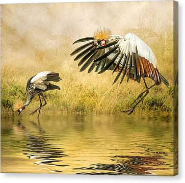 Canvas Print featuring the photograph Grey Crowned Cranes by Brian Tarr