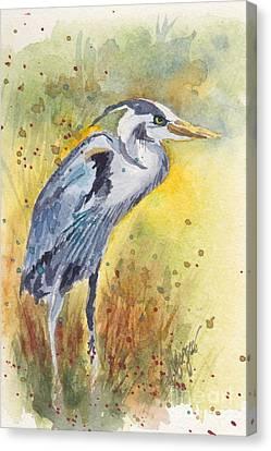 Grey Heron Langley Wa Canvas Print