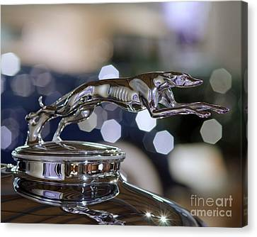 Grey Hound Hood Ornament Canvas Print
