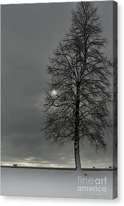 Canvas Print featuring the photograph Grey Morning by Steven Reed