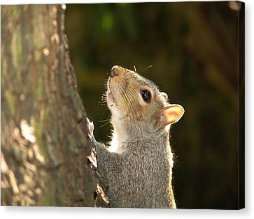 Canvas Print featuring the digital art Grey Squirrel by Ron Harpham