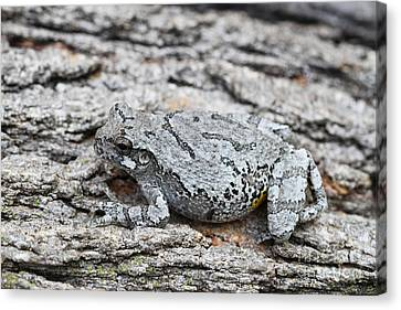 Canvas Print featuring the photograph Cope's Gray Tree Frog by Judy Whitton